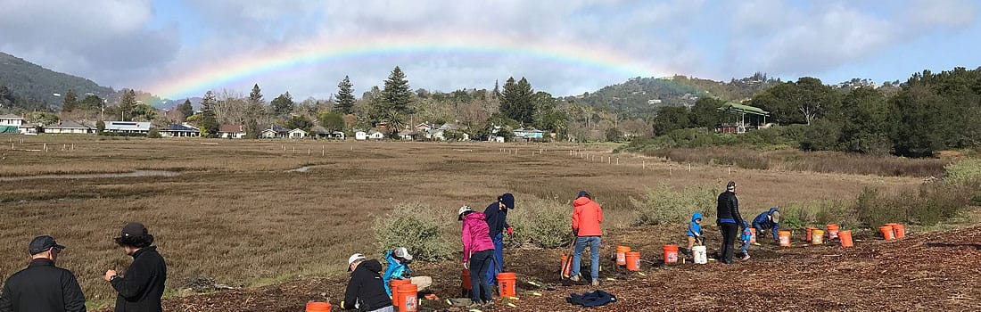 Volunteers planting at Creekside