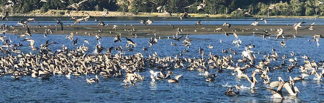 Birds flocking on the lagoon