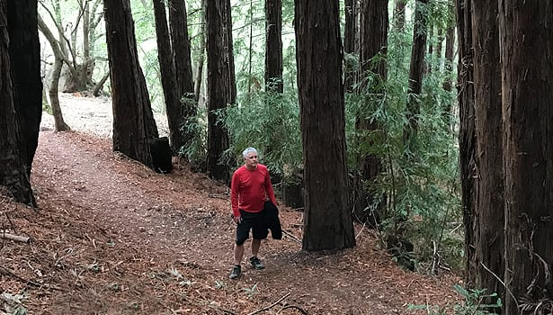 Hiker passing through redwood grove