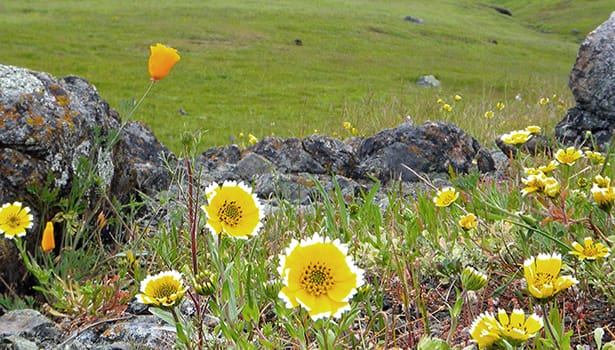 Wildflowers among the rocks