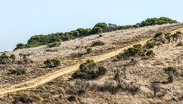 Dry summer hillside