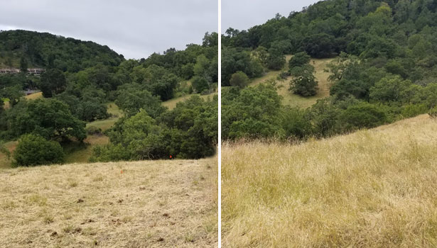 Before and after of hillside grazing