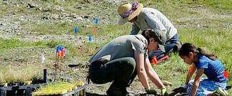 Parks staff and volunteers installing rare plants at Ring Mountain